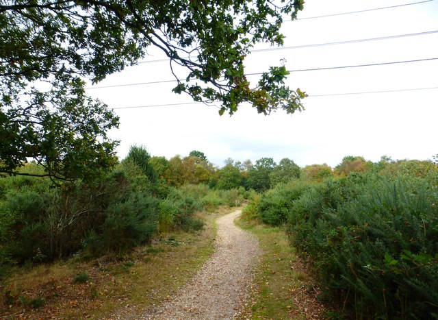 Bridleway passes under power lines on Yately Common