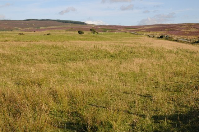 Upland grazing and heather moors