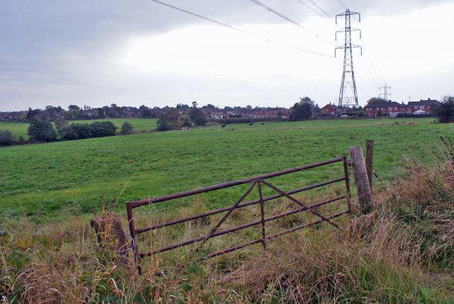 Pastureland at Withystakes