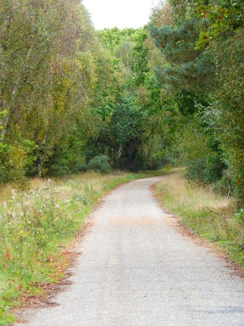 Track going towards Blackwater Lodge on Yately Common