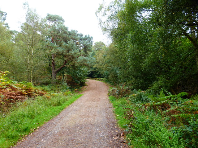 Approaching a bend on the main bridleway on Yately Common