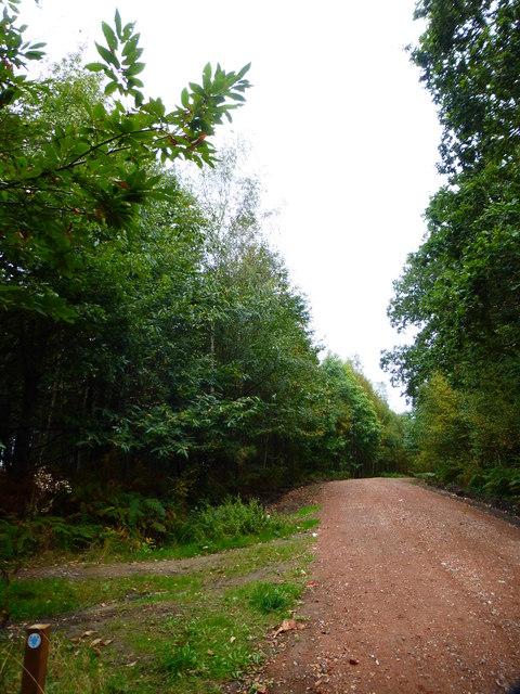 Minor track joins bridleway before bend