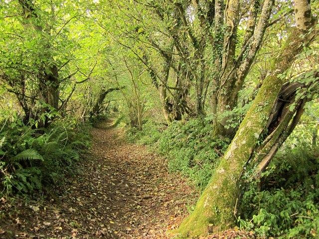 Bridleway near Waddon