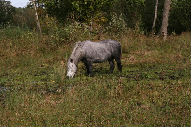 Bog-trotting pony in the lowest part of Holt Lowes