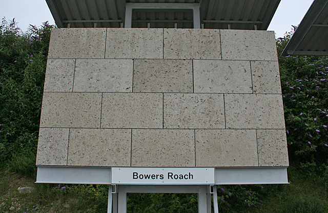 Bowers Roach