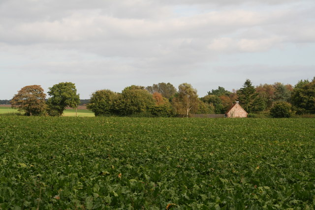 Across the beet field towards Lower Bodham