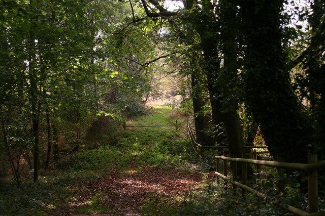 Holt: track into New Plantation