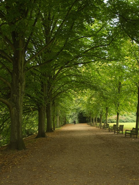 Tree-lined path, near Kenwood House, Hampstead Heath