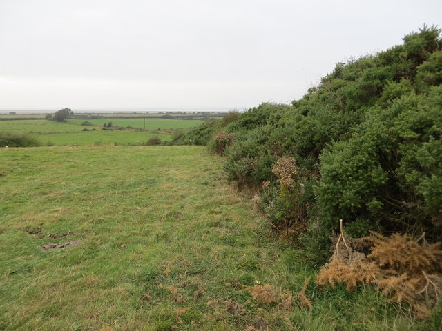 Field and Hedge Line viewed from the Cardurnock Triangulation Pillar