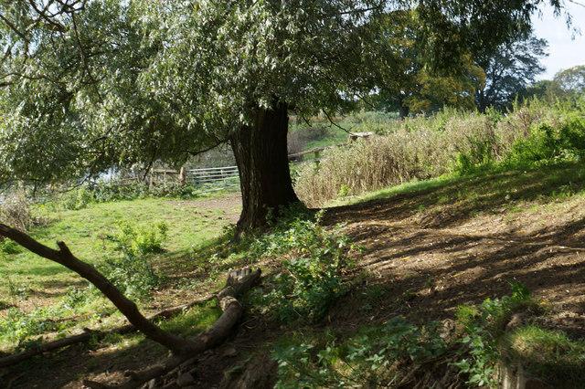 Path at  Ellenthorpe Hall