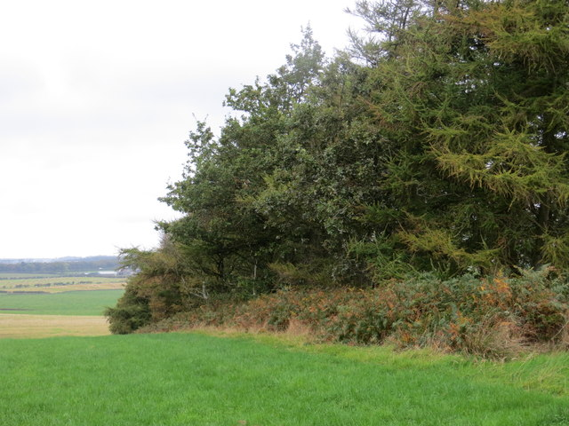 Woodland and Field at Spittalridding Hill