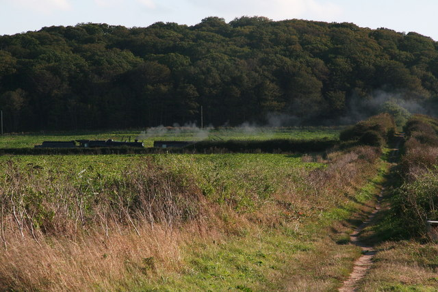 Train steaming under and past the farm track and bridge north of Oak Wood