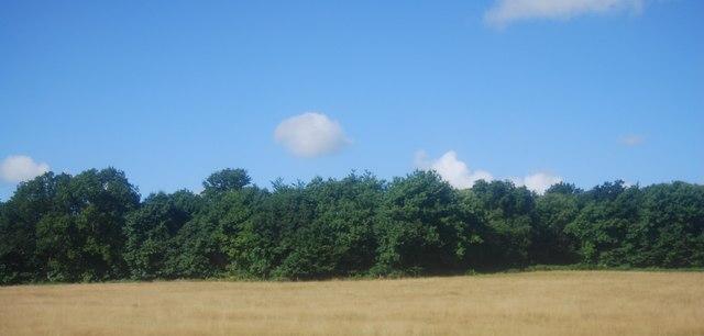 Griggs Wood