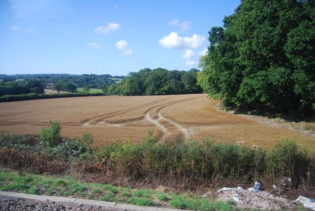 Tram lines in wheat