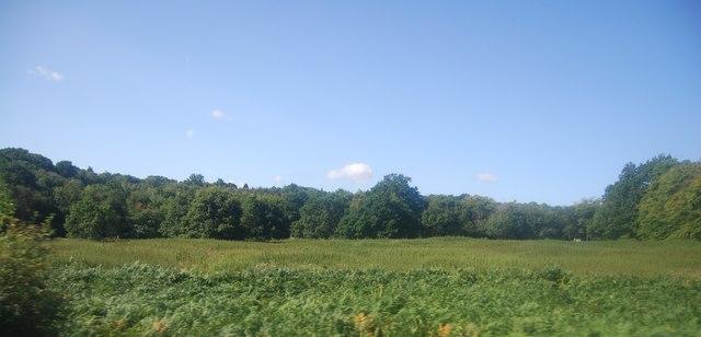 Field in Battle Wood