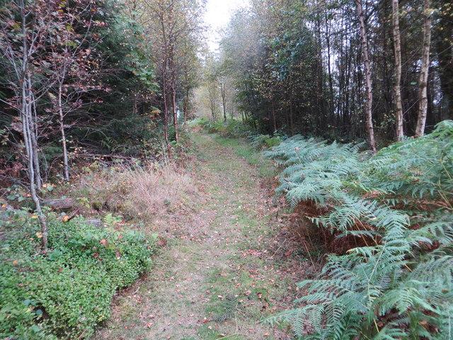 Path through woodland on Woodcock Air