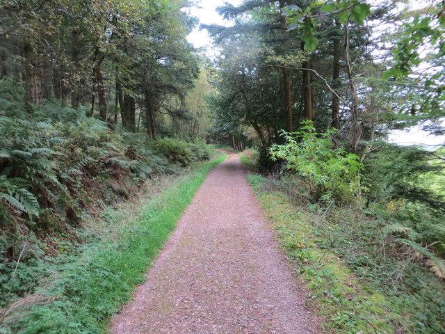 Track through Brownmoor Wood