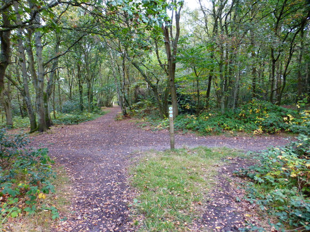 Bridleway crossing in the woods west of The Flats