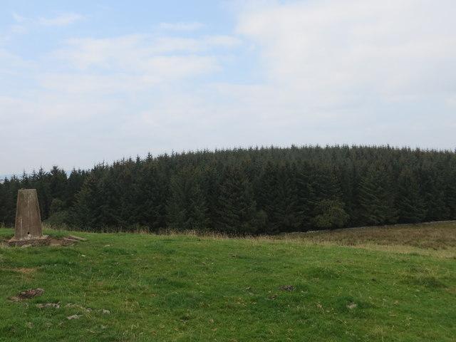 Auchenroddan Forest viewed from the Triangulation Pillar on Newbigging Hill
