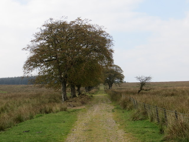 Track leading to Newbigging Hill