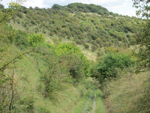 Tree-clad Haydown Hill