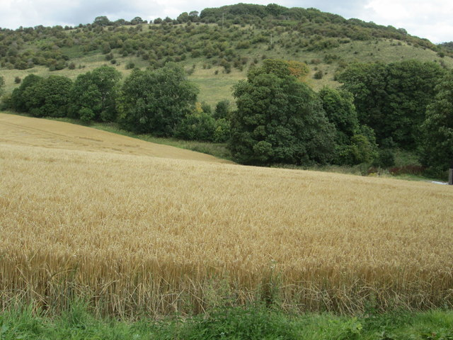 Haydown Hill from near to Hippenscombe