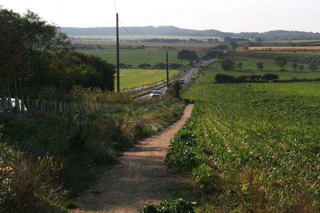 Down the beet field and across the A149 to Sheringham Park