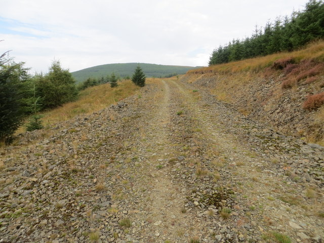 Forest Track Ascending Ewelaw Rig