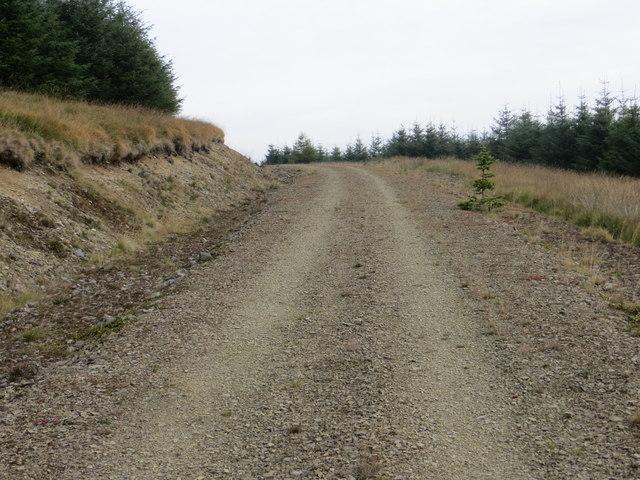Forest Track Ascending to Upper Oliver Dod