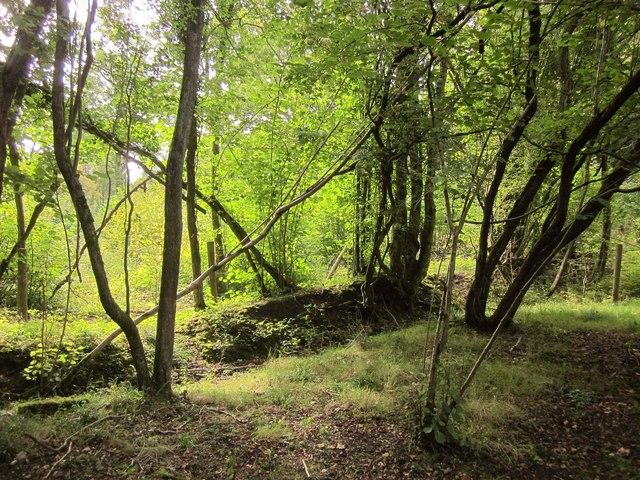 Edge of North Elms Wood