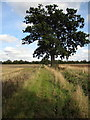 TL0946 : Footpath to Southill Road by Philip Jeffrey