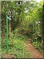 ST5577 : Footpath, Coombe Dingle by Derek Harper