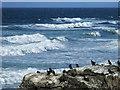 NR6528 : Seabirds on a rock near Tangy Lodge : Week 39