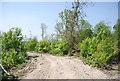 TQ6038 : High Weald Landscape Trail, High Wood by N Chadwick