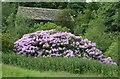 SE2102 : Rhododendron in full flower by Bobby Clegg