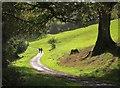 SX8158 : Sharpham Drive by Derek Harper