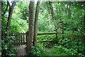 TQ3328 : High Weald Landscape Trail by N Chadwick
