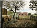 SK7130 : Roses Farm by Derek Harper
