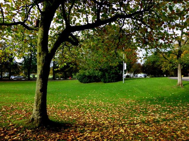 tree and fallen leaves the grange kenneth allen. Black Bedroom Furniture Sets. Home Design Ideas