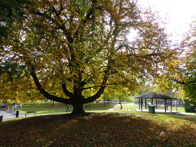 large chestnut tree the grange kenneth allen cc by sa 2. Black Bedroom Furniture Sets. Home Design Ideas