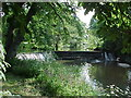SP1563 : River Alne from Wootton Bridge by Tim Glover