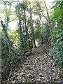 SJ9493 : Woodland path at Pole Bank by Gerald England