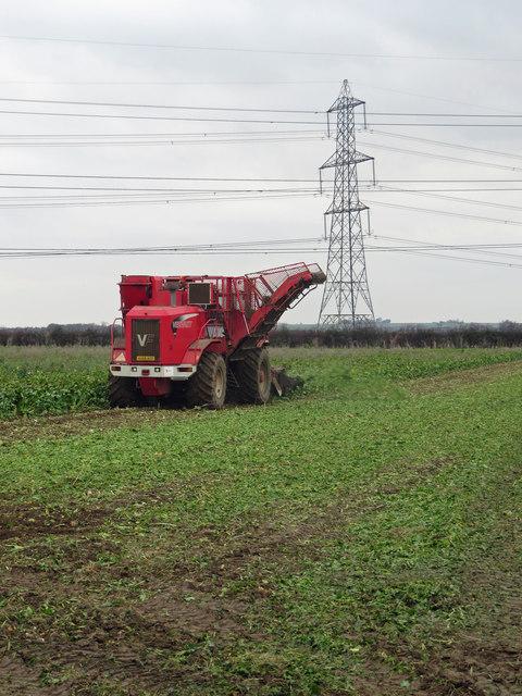 Harvesting Beet near Barrow Wold Farm
