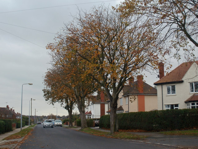 Autumn Colour on Tofts Road