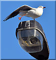J3371 : Gull and streetlight, Belfast - November 2014(1) : Week 44