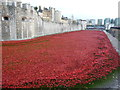 TQ3380 : Poppies at The Tower of London #8 by Richard Humphrey