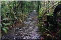 SX7068 : Flooded Bridleway near Scorriton : Week 45