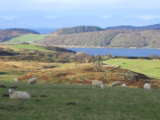 Rough pasture near Portachoillan
