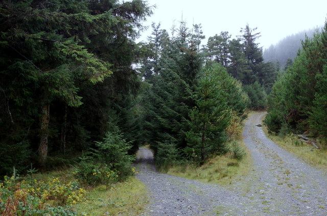 Forest tracks, Bryn Diliw