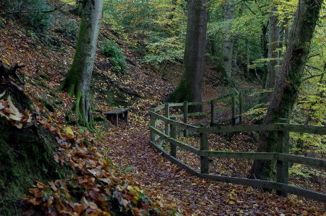 Woodland walk, Rock Park, Llandrindod Wells
